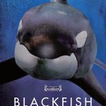 Blackfish (2013) Dvdrip Latino [Documental]