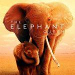 Reina de elefantes (2019) Dvdrip Latino [Documental]